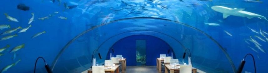 Des vacances sous la mer