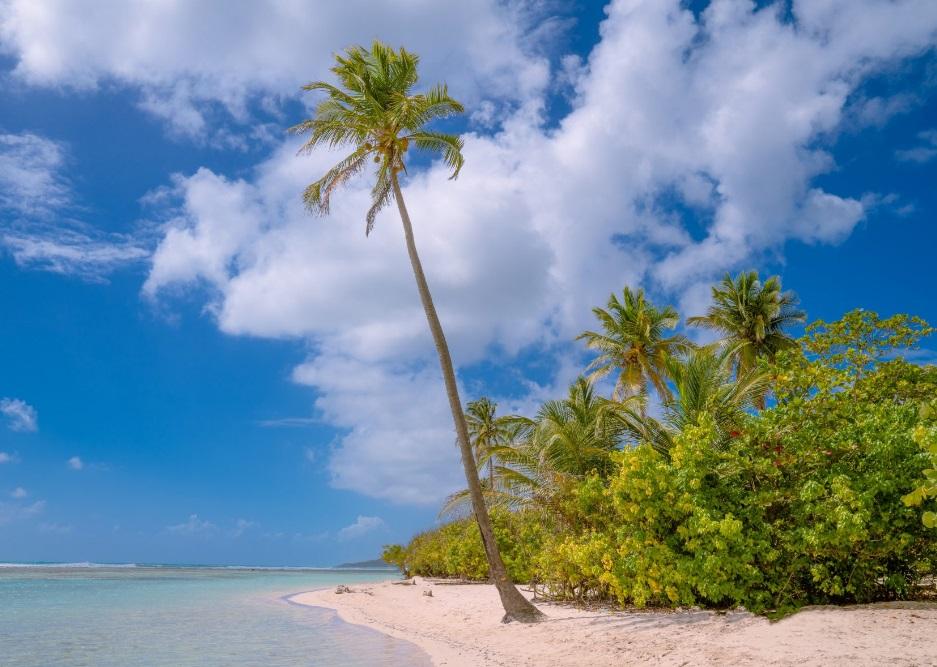 Plage avec palmiers en Guadeloupe